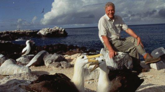 Naturfilmpionier Sir David Attenborough (90)