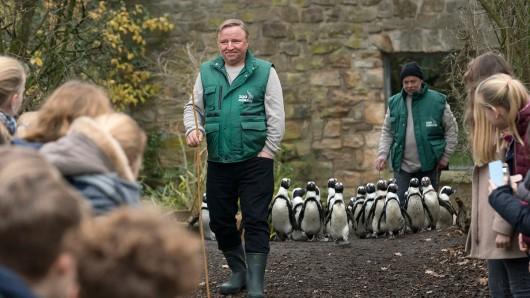Undercover-Kommissar beim Pinguin-Walk: Kommissar Frank Thiel (Axel Prahl, M) ermittelt undercover im Zoo. Das Wohl der watschelnden Seevögel liegt ihm besonders am Herzen.