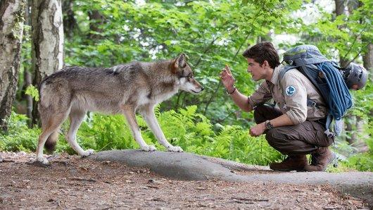 onas Waldek (Philipp Danne), Ranger im Nationalpark Sächsische Schweiz, entdeckt einen Wolf.