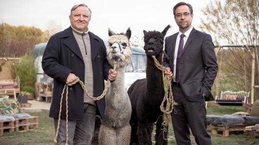 Kommissar Frank Thiel (Axel Prahl, links) und Prof. Karl-Friedrich Boerne (Jan Josef Liefers, rechts) mit zwei Alpakas.
