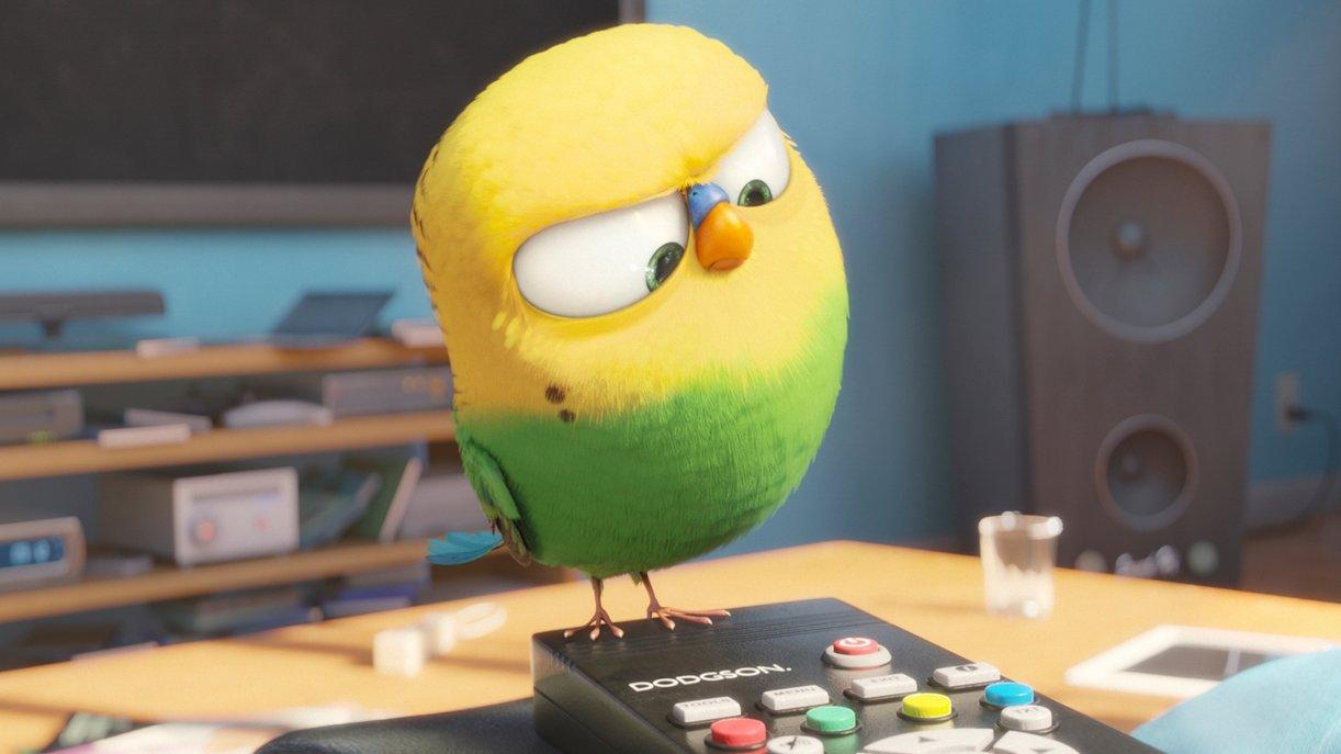 Das einzige Tier, das nicht spricht: Kanarienvogel Sweet Pea