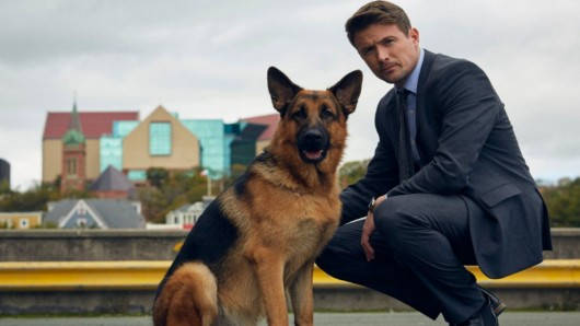 Vorhang auf für das kanadische Kommissar Rex-Remake: John Reardon als Detective Charlie Hudson und Diesel als Polizeihund Rex